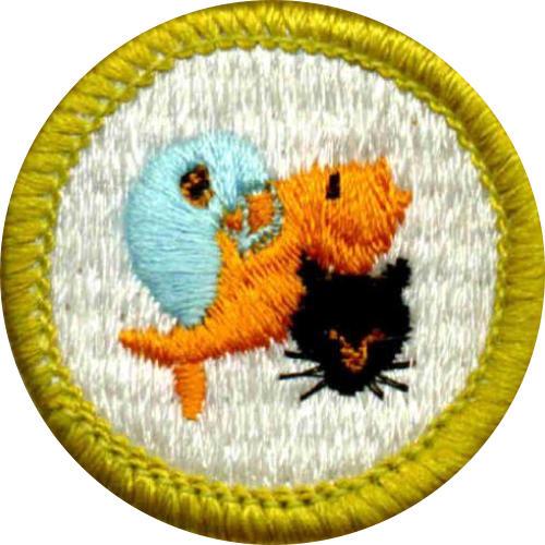 Merit Badges 5 - Boy Scout Troop 721 - Milford, CT
